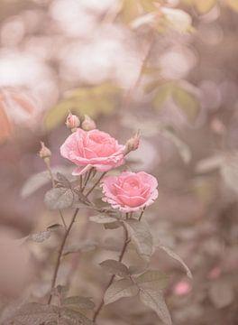 Blumen Teil 189 von Tania Perneel