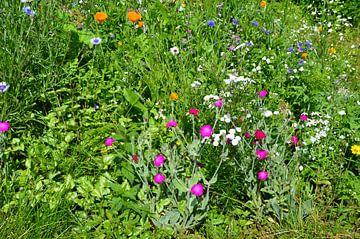 Wildblumen von Susanne Seidel