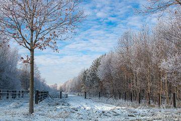winterlandschap  von Jan  Sterken