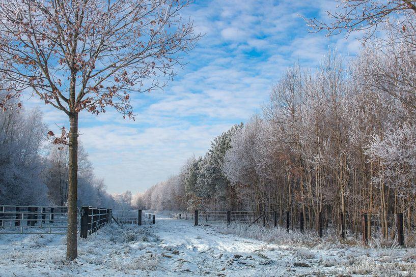 winterlandschap  sur Jan  Sterken