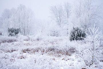 Heide mit Schnee erfunden von Karijn Seldam