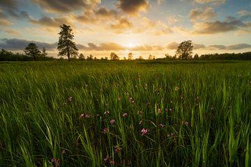 Zonsondergangen Weerribben Wieden von Rick Kloekke