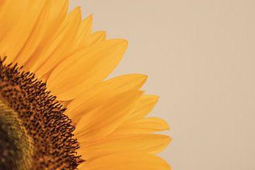 zonnebloem von Marian van den Boogaard