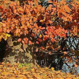 herfstkleuren van Yvonne Blokland