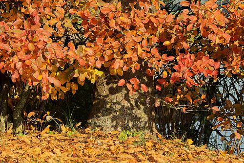 herfstkleuren van