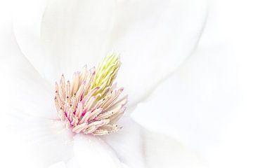 Magnolia sur Greetje van Son