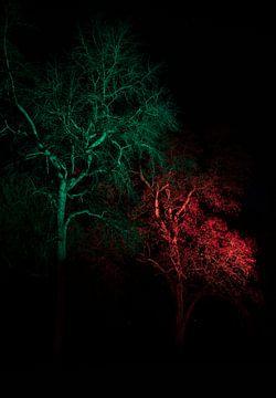 Unheimliche Bäume von Ton Tolboom