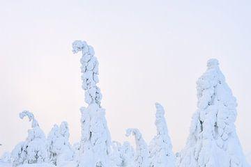 Marshmallow-Bäume von Kimberley Jekel