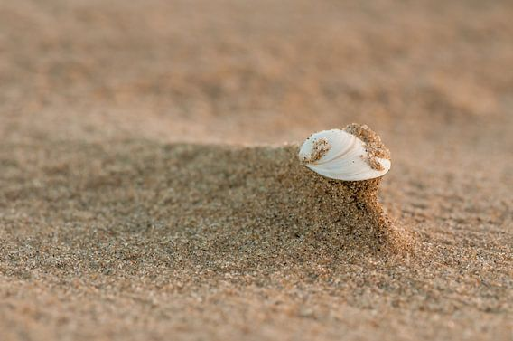 Beach van Bas Van Ooijen
