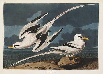 Turnbulls  - Teylers Edition -  Birds of America, John James Audubon van Teylers Museum