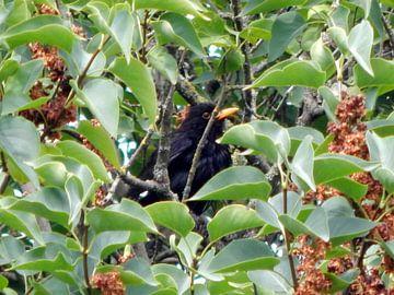 Vogel in de boom tussen de bladeren. van Jake's shop