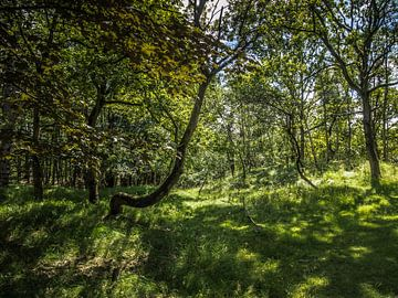 Une prairie dans la forêt