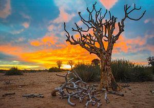 Mooie zonsopkomst boven de Kalahari woestijn, Namibië