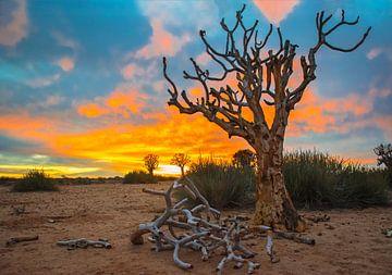 Mooie zonsopkomst boven de Kalahari woestijn, Namibië van Rietje Bulthuis