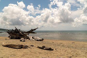 Boom op Natsepa Beach, Ambon, Molukken, Indonesië van Zero Ten Studio