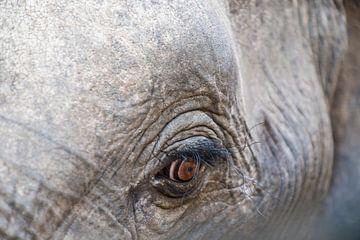 oogje op een olifant von Erwin van Liempd