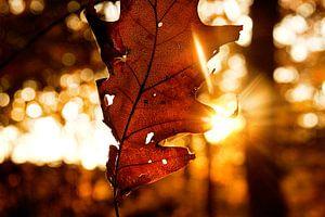 Herfstachtige zonsondergang bos van Marloes Bogaarts