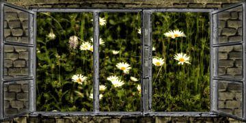 Fensterblick - Sommernacht von