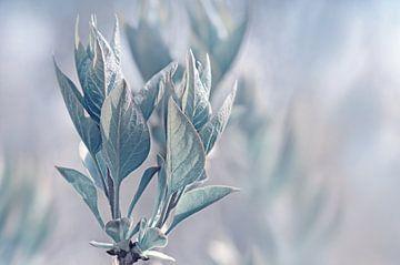 Blätter von Violetta Honkisz