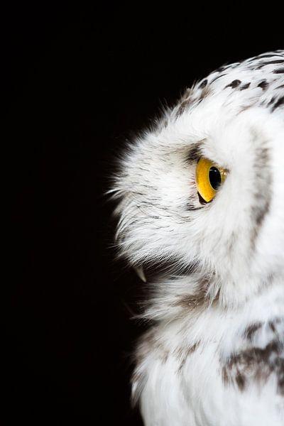 Sneeuwuil op wacht. van Marco Willemsen