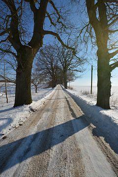 verschneite Allee im Winter bei Groß Stresow, Insel Rügen von GH Foto & Artdesign