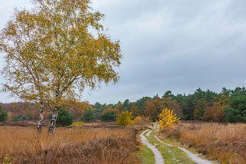 Heideveld met witte berk in herfstkleuren van Hilda Weges