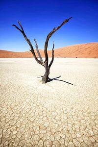 Deadvlei in Sossusvlei, Namibia