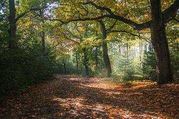 Herfst van Daphne Elderenbos