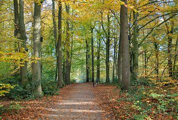 Wald in Herbstfarbe auf der Veluwe von Compuinfoto .