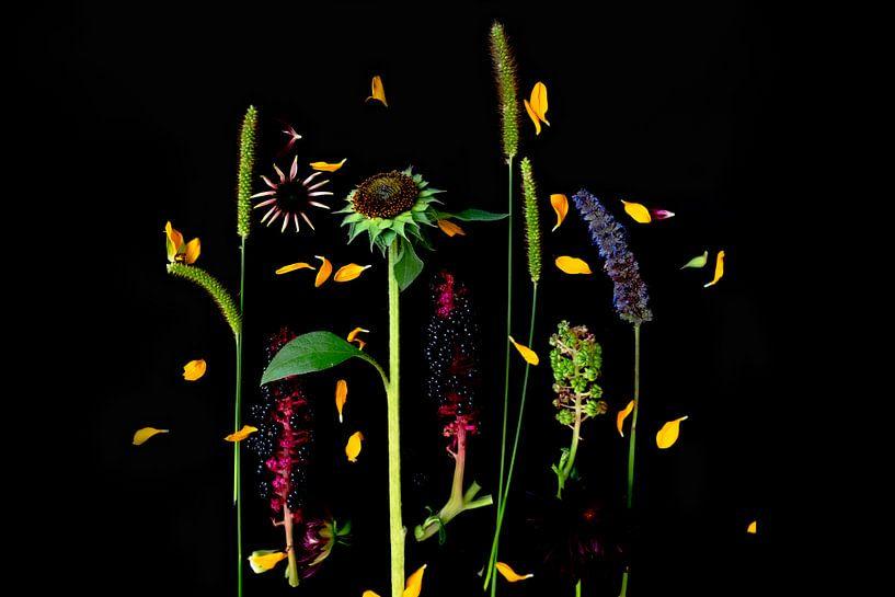 Blumenporträt (Sonnenblume) von Ineke VJ