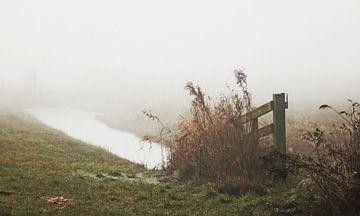 Misty morning ...