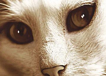 Ogen van een Kat van Nathalie Antalvari