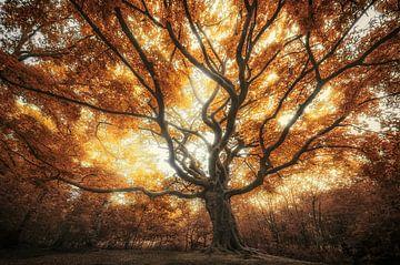 Grote oude herfst boom van Rob Visser