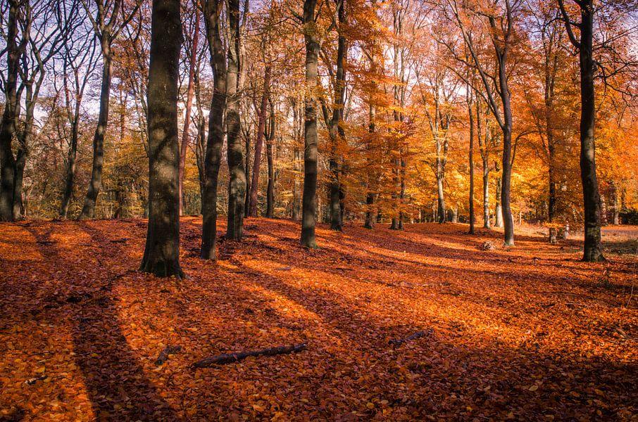 Bos in herfstkleuren van Marcel Pietersen