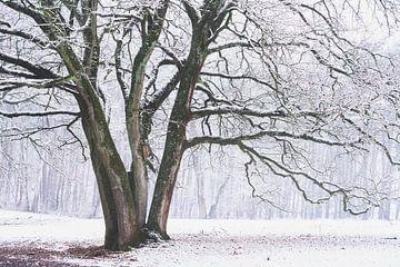 Het winter vogelhuisje van Joris Pannemans - Loris Photography