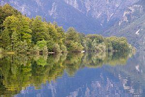 Dichte bossen reflecteren in het water van