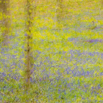Voorjaar in het bos van Wendy van Kuler