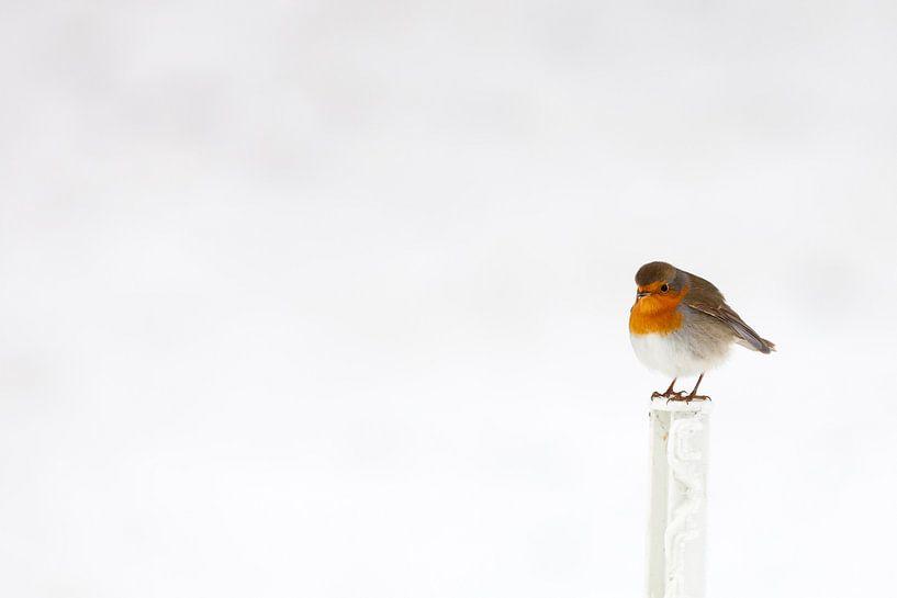 Roodborst in de sneeuw in de winter van Bas Meelker