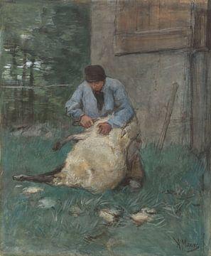 Tondeur de moutons, Anton Mauve