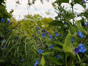 Blauwe bloemetjes van Anne de Brouwer