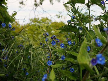 Blauwe bloemetjes von Anne de Brouwer