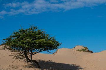 Nederlandse duinen van Arjan van der Veer