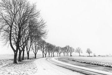 Baumreihe in winterlicher Polderlandschaft von Beeldbank Alblasserwaard