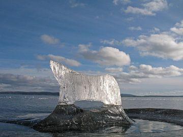 Ice bear in sweden sur Kas Maessen