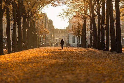 Den Haag - Lange Voorhout van