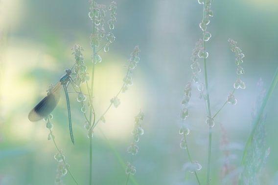 Weidebeekjuffer in droomsfeer. van Francis Dost
