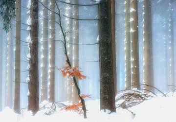 Winterfarben IV von Lars van de Goor