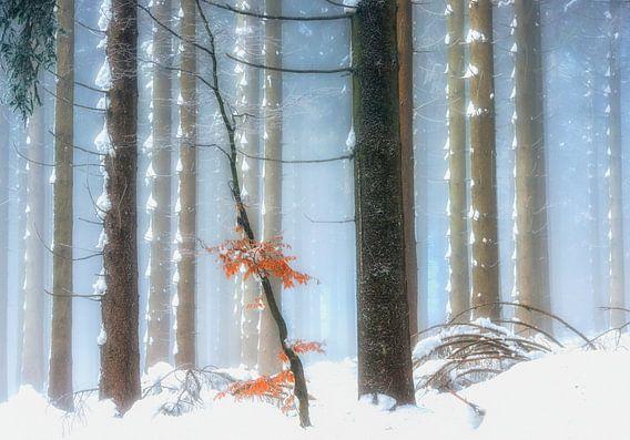 Winter Kleuren IV van Lars van de Goor