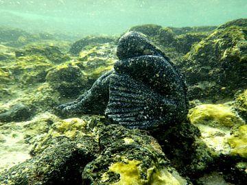 ballerina  in koraal onderwaterwereld  sur Tineke Bos