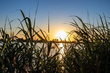 Haag van riet met zonsondergang van thomas van der Wijngaard